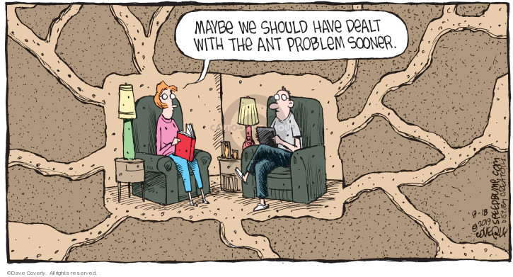 Maybe we should have dealt with the ant problem sooner.